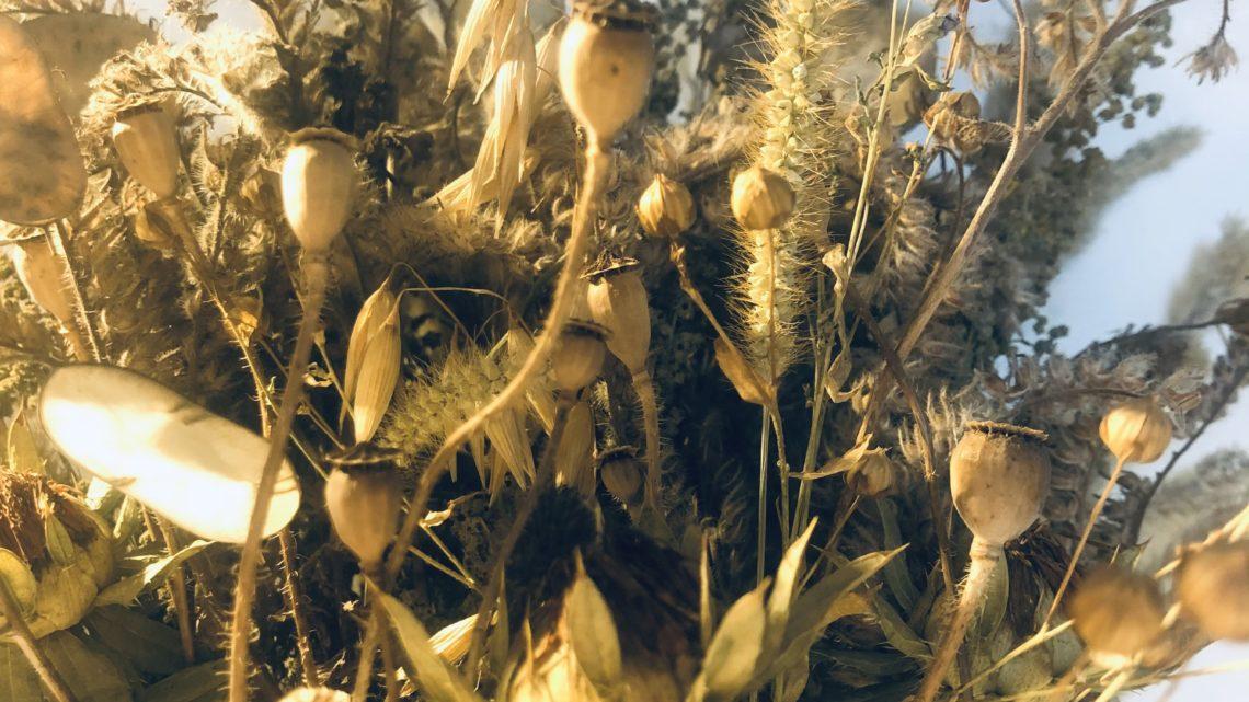 Selmas schöne Trockenblumen