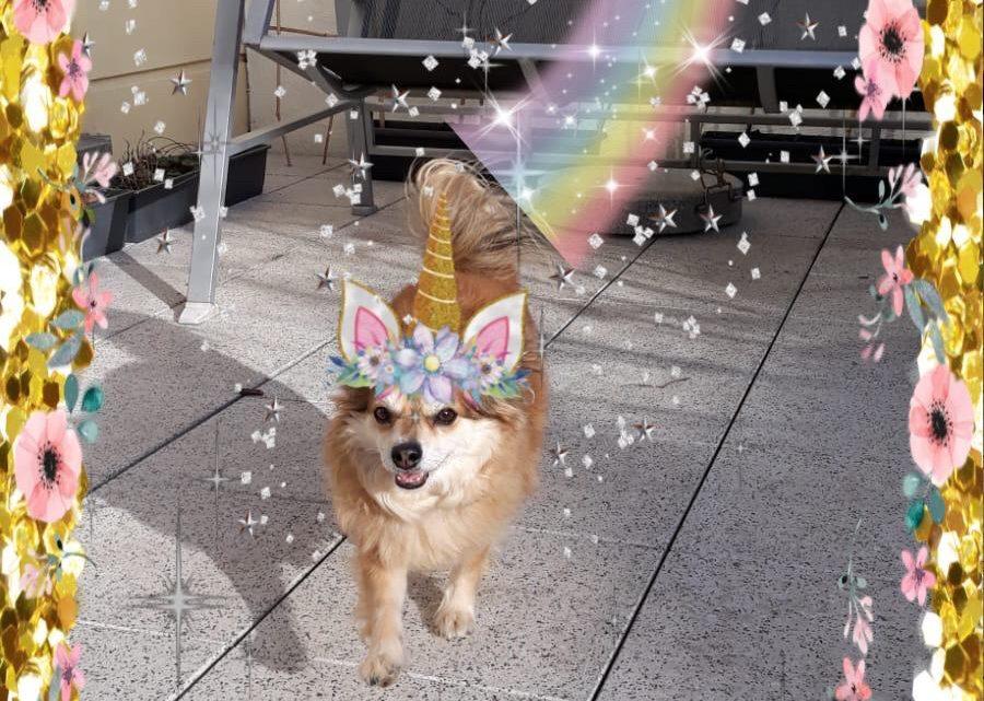 Eva hat einen Leihhund :)
